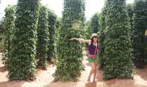 Khu du lịch sinh thái vườn tiêu Phú Quốc