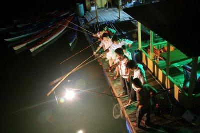 Trải nghiệm câu mực đêm trong tour du lịch Phú Quốc