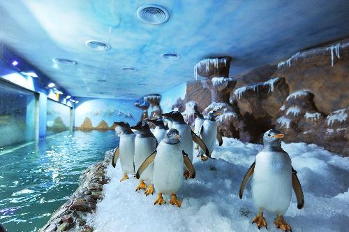 Những chú chim cánh cụt to lớn, dáng đi lạch bạch nhưng lại khá nhanh nhẹn